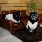 ACME FURNITURE FRESNO Leather sofa for Dog 54,000yen