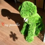 Imitation Green Toy poodle 48,600yen