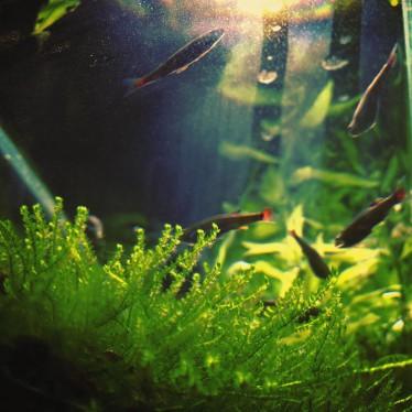 aqualium